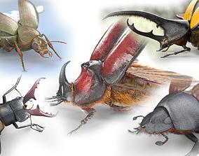 3D 5 Beetles Rigged PBR
