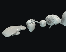 3D model Human Internal Organs Base Meshes Collection