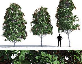 3D Magnolia grandiflora