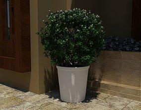 3D model plant pot landscape
