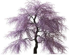3D Sakura Tree v2