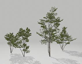 Little trees 3D model