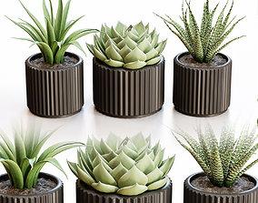 Flowerpots in black pots 3D