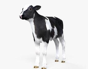 Calf HD 3D model
