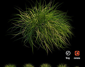 3D model Grass collection 03