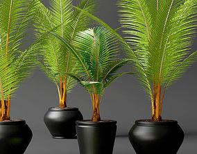 3D Coconut palm set
