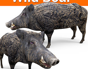 low-poly 3D game ready Wild Boar