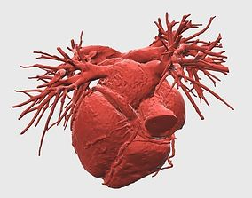 Heart 3D print model