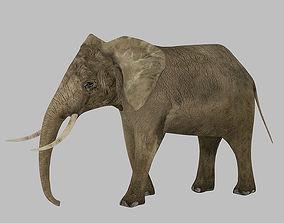 3D model Elephant Rigged Animated