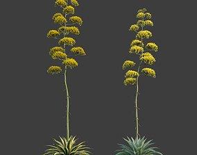 3D XfrogPlants Century Plant - Agave Americana