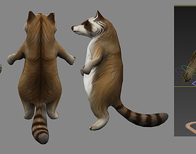 3D animated animal raccoon