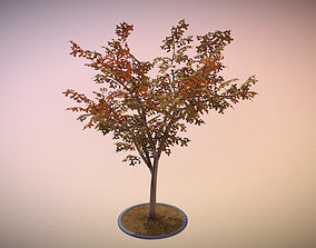 Rowan Tree - Sorbus-Aucuparia - 12m - Autumn 3D model