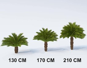 3D model Cycas Palm Small