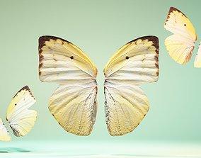 Butterfly The Lemon Emigrant 3D model