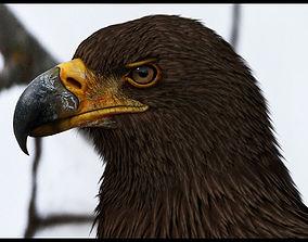Eagle 3D Model animals