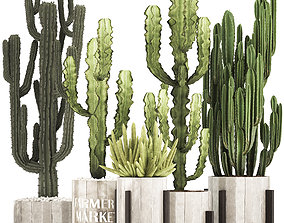3D Collection of Exotic Cactus Plants 8