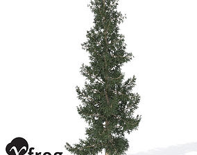 3D model XfrogPlants Colorado Blue Spruce