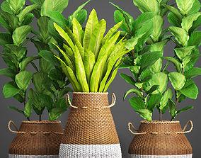 3D model Collection plants 40