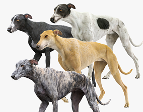 Greyhound Fur Animated Collection 3D