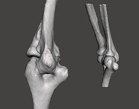 3D model Elbows - male- age 49