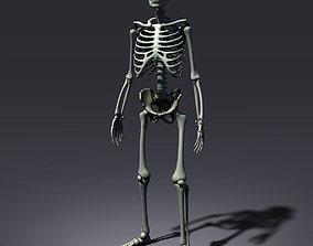 Skeleton Lowpoly 3D model