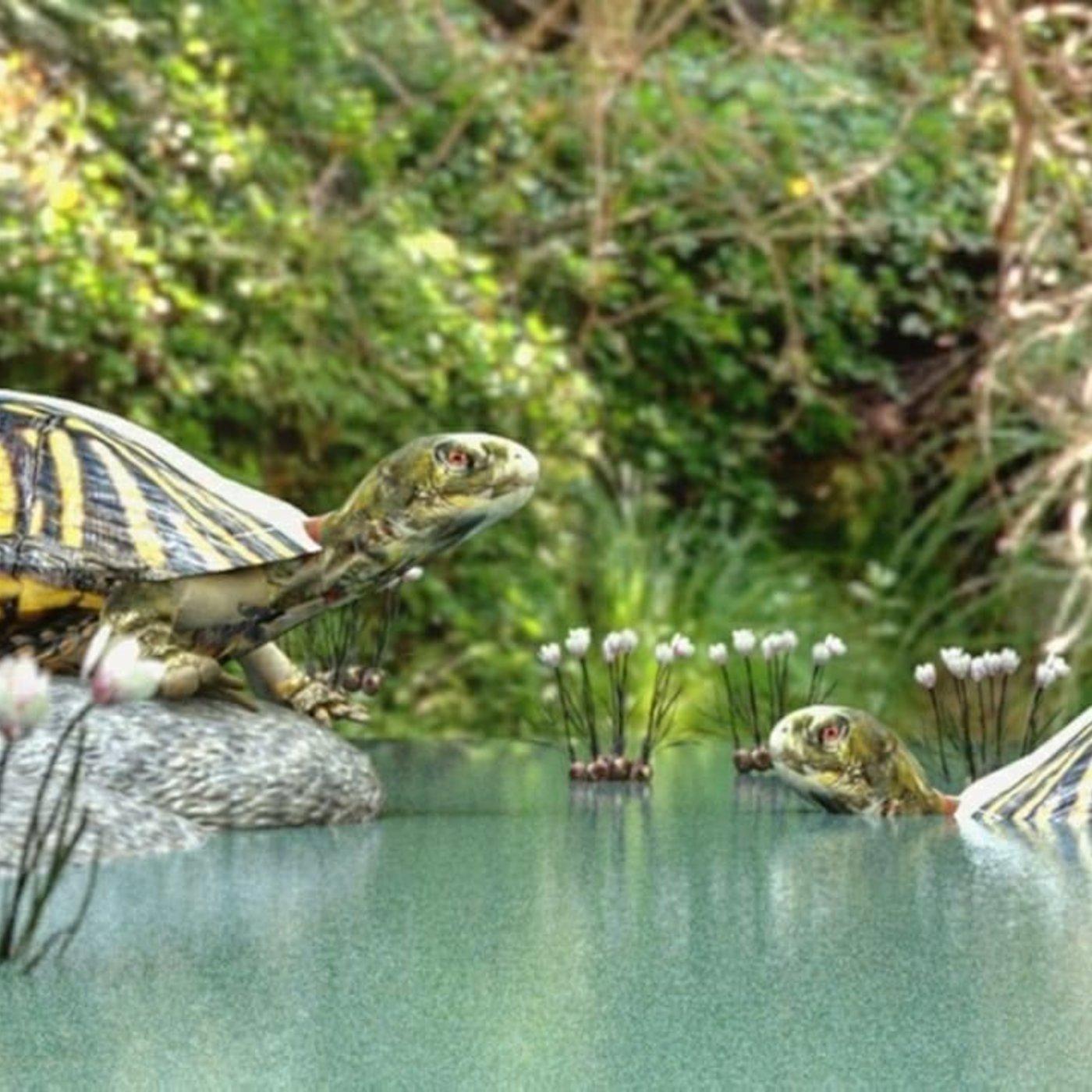 Turtles sitting on rock