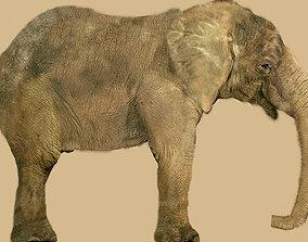 3D model safari elephant