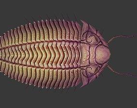3D model Trilobites