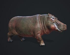 PBR Hippopotamus 3D asset