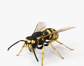 European Wasp HD 3D model