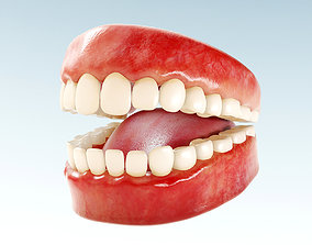 Realistic human Teeth - Mouth for character low-poly 3