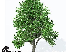 3D model XfrogPlants European White Elm