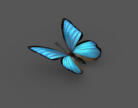 Butterfly 3d model nature