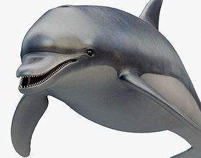 3D model Animated Dolphin animated