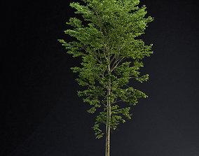 3D model BeechTree 01