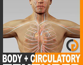 Human Male Body and Circulatory System Textured - 3D model