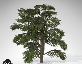 3D XfrogPlants Lebanon Cedar