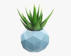 Succulent in planter pot 01 3D