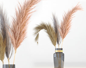 3D Pampas-grass