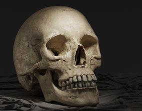 3D model Human Skull - Textured Midpoly