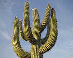 XfrogPlants Saguaro - Carnegiea 3D model