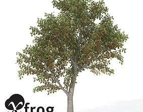 3D XfrogPlants Sweet Cherry