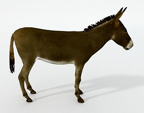 Brown Donkey 3D model