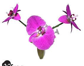 XfrogPlants Flowers MegaBundle 3D