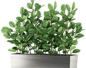 3D Plants collection 461