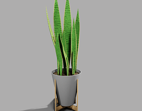 Snake Plant in Pot with Stand 3D