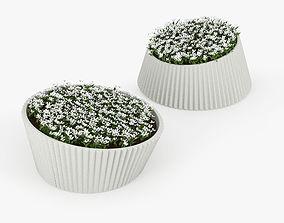 3D LENA Flowers
