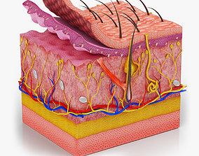 Skin Anatomy 3D model PBR