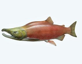 3D model Salmon Fish