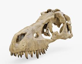 Dinosaur Skull 3D asset